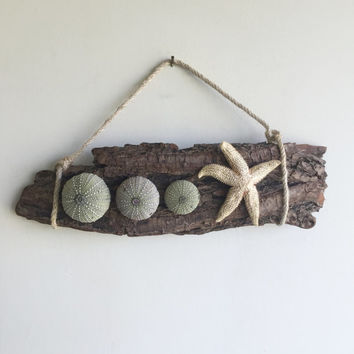 Starfish Wall Decor/ Beach Wall Hanging/ Coastal Decor/ Ocean Decor/ Beach House Decor/ Sea Urchin Wall Hanging/ Driftwood Bark Decor