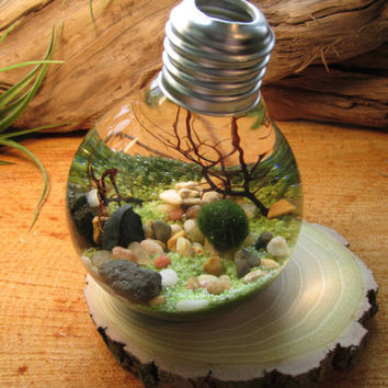 Marimo - Reclaimed Light Bulb Aquarium with Living Moss Ball
