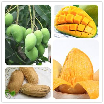 Mangifera Indica Seeds 1 Pcs/Bag Bonsai Tree Mango Seeds Organic Fruits  Seeds Sweet Tastypot Diy Home Garden Planting