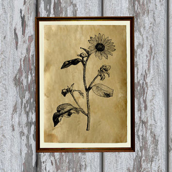 Sunflower print nature art Flower illustration Old paper home decor 8.3 x 11.7 inches