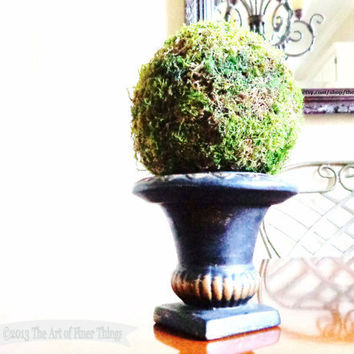 Moss Ball Topiary black gold urn large moss ball mantel shelf decor preserved sheet moss