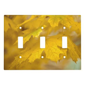 Yellow autumn maple leaves. light switch cover