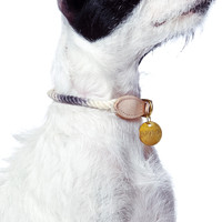 Ombre Fade Brass Dog Collar