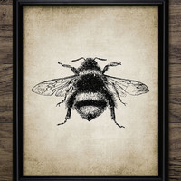 Bumble Bee Print - Bee Illustration - Bee Art - Bees - Entomology - Digital Art - Printable Art - Single Print #60 - INSTANT DOWNLOAD