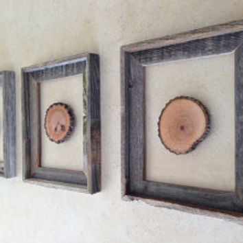 Tree Slice Art - 'Young Forest' - Modern Wooden Art - Rustic Barn Wood Frames w/ Suspended Wood Slices - Wood Decor