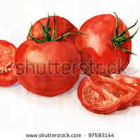 Google Image Result for http://image.shutterstock.com/display_pic_with_logo/491176/97583144/stock-photo-watercolor-painting-still-life-tomatoes-on-a-light-background-97583144.jpg