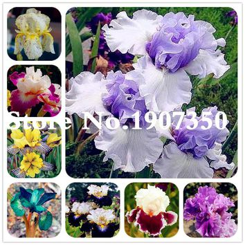 100 pcs Aquatic plant Iris Flower Bearded Iris Rare Bonsai Phalaenopsis Orchid Flower Potted Plant Nature Plants For Home Garden