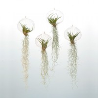 designdelicatessen - Air Planting - Air Plants - Hanging plants in copper net - Air Planting