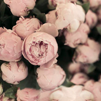 Peony photograph, pastel, pink, Flower print, Floral, still life, Summer Garden, peonies, wall decor