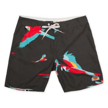 Parrot Boardies