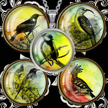 Vintage Birds Watercolor background for Bottle caps, Pendants, Magnets  Printable Digital Collage Sheet WB242
