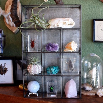 Metal Wall Curio Display Shelf