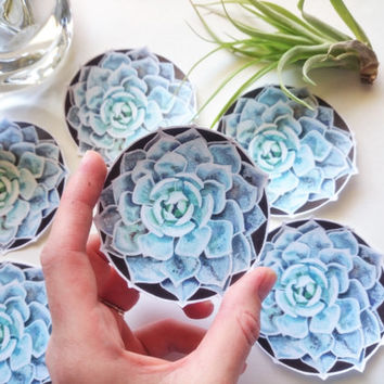 Succulent stickers, Original artwork, Laptop stickers, Die cut stickers, Plant stickers, Nature and Garden