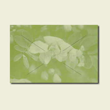 Anthotype Green Canvas Wall Art Print. Cassia Cutey Anthotype Wall Decor Piece for your Prints Ideas.