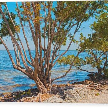 Blue Biscayne - Wood Print