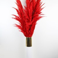 "Dried Pampas Grass in Red - 5-6 Stems per Bunch - 30""-42"" Tall"