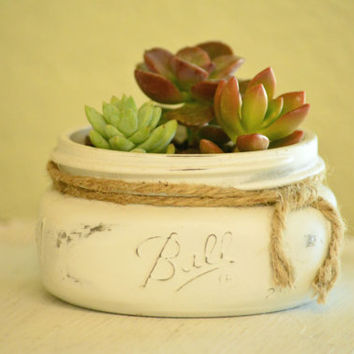 Red & Green Succulent Garden in White Distressed Painted Mason Jar -Send as a Gift, Wedding or Baby Shower Favors Centerpieces