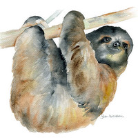 Sloth Watercolor Painting Giclee Print 8 x 10 by SusanWindsor