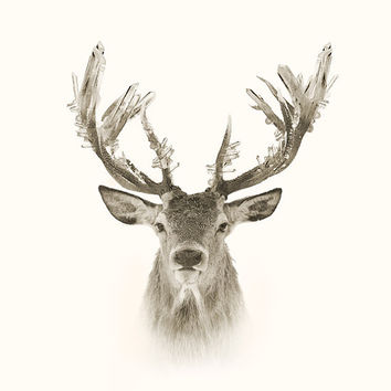 Quartz Crystal Deer Antlers Signed Print  | Art | Photograph | Illustration /Sepia