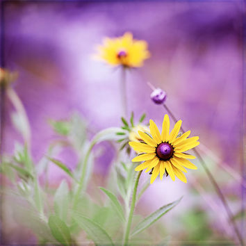 """Purple Photography, Purple Yellow Flower Art, Violet Floral Wall Print, Purple Nursery Picture, Yellow Nature Wall Decor, """"Purple Passion"""""""