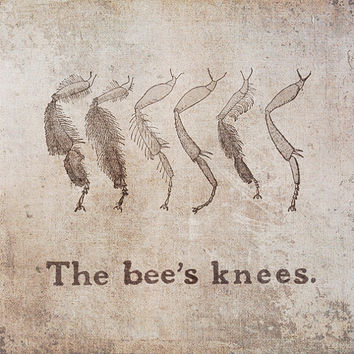 Bee's Knees Canvas Wrap, Rustic Wall Art, Typography, Whimsical Home Decor, Insect, Entemonlogy, Brown, Grey, 6x6, 20x20