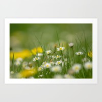 Daisy meadow Art Print by tanjariedel