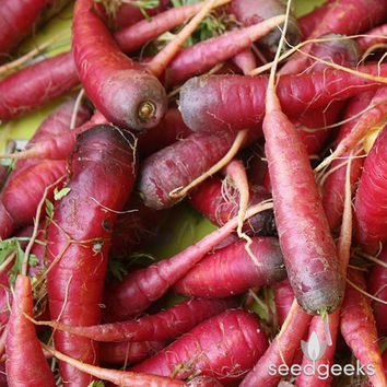 Atomic Red Carrot Heirloom Seeds - Non-GMO, Open Pollinated, Untreated