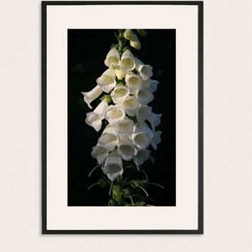 White Floral Foxglove Photography, Monochromatic Art Photogrpahy, Wall Art, Nature Photography, Photograph of White Flowers.