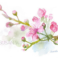 Cherry Blossoms Watercolor Painting - 5 x 7 - Giclee Reproduction - Floral - Fine Art Print
