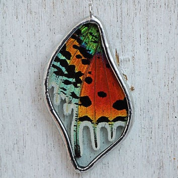 Real Sunset Moth Wing Necklace by HouseThatCrowBuilt on Etsy