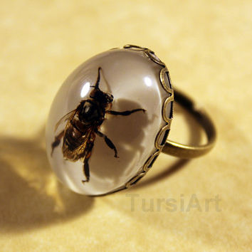 Bee Ring - Real Honey Bee in Resin Brass Ring or Silver Ring Adjustable Size Insect Taxidermy preserved insect in resin real bug jewelry