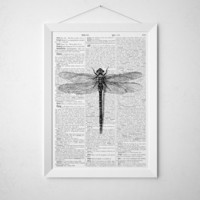 Dragonfly poster Insect drawing Dictionary print TO314-B