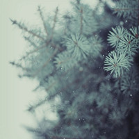 Buy 1 Get 1 Free Week - Nature Photograph - Blue and White Decor, Snow, Falling, Nursery - Little Star 8x10