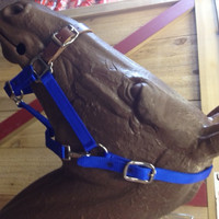 Easy Switch Halter and Leather Buckle Nose Nylon Halter