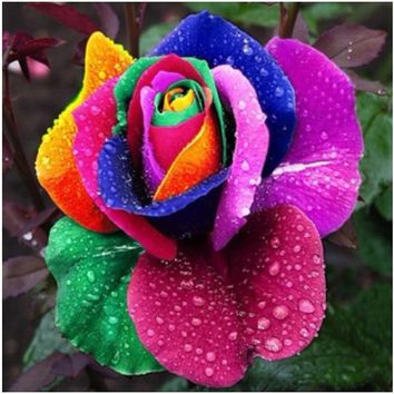 200 Pcs 7 Colors Rose Seeds