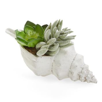 ALLSTATE Small Succulent Garden in Shell | Nordstrom