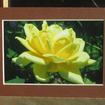 Flowers From My Garden, Yellow Rose, Home Decor, Wall Hanging