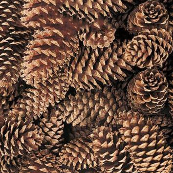 "Box of 100 Natural Medium Pine Cones - 3-5"" Long - Ships Alone"