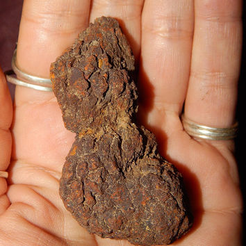 Genuine COPROLITE - Real FOSSILIZED POOP - Dung Stone - Poop Fossil - Fossilized Dinosaur Poop - Prehistoric Fossil - Fossil Collection
