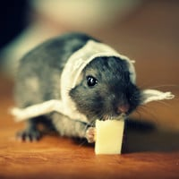 Gerbil Wearing A White Lace Kerchief Refrigerator Rectangle Magnet