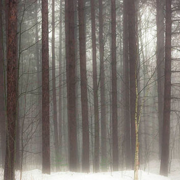 Cyber Monday, Sale, Nature photography, rustic, pine, brown white, fog, woodland wall decor, 5x7