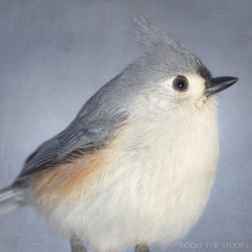 Bird Photo, Animal Photography, Nature Photography, Bird Art, Fine Art Photograph, Tufted Titmouse Art Print, Bird Portrait, Wildlife Photo