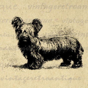 Digital Antique Dog Image Graphic Illustration Printable Download Vintage Clip Art Jpg Png Eps  HQ 300dpi No.1464