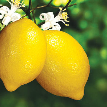 Lemon 5 Fold Essential Oil