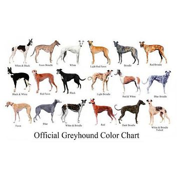 Dogs Greyhound Color Chart poster Metal Sign Wall Art 8in x 12in