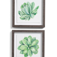 14x14 Succulent Wall Art - Living Room - T.J.Maxx