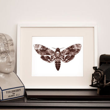 Death's Head Hawk Moth -Art Print - Various sizes
