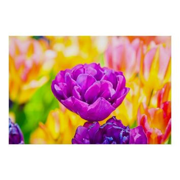 Tulips Enchanting 15 Poster