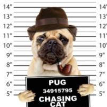 cool pug chasing cat t-shirt mens t-shirts dogs mugshot t-shirts mug shirt dog pets tshirt pet lover great gift