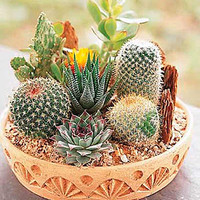 2016 new 60 piece Cactus Seeds Mix Organic Ornamental Seed unusual succulents can purify the air and prevent radiation